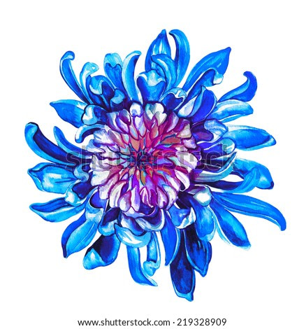 garden chrysanthemum flower illustration on watercolor