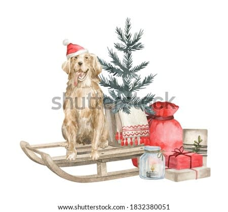 Watercolor illustration with golden retriever dog and Christmas tree on the sleigh. Winter aesthetic, red santa bag with presents, candle and gift boxes.