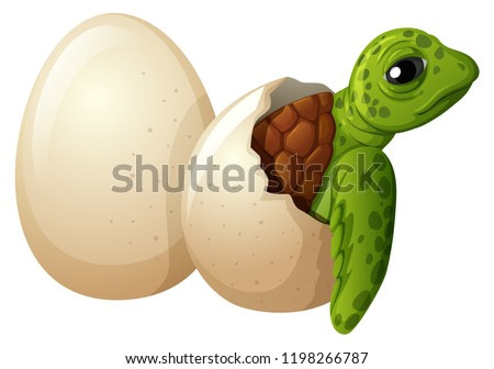 Baby turtle hatchling egg illustration