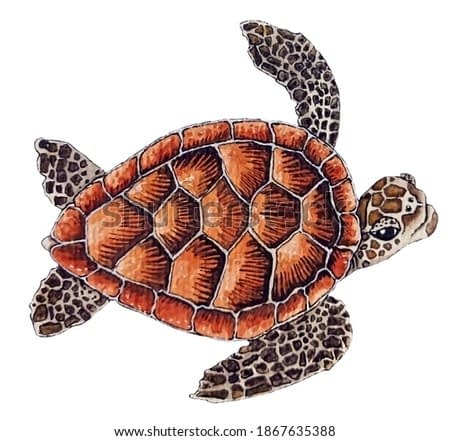 Animal Illustration: sea turtle. Watercolor, hand painted, isolated.
