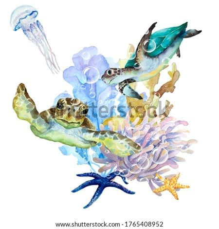 Sea turtles, jellyfish with long tentacles, seaweed, coral, anemone and starfish on a white background, hand drawn watercolor illustration.