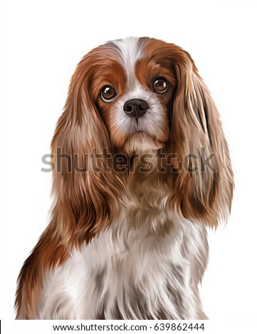 Drawing dog portrait on a white background. Cavalier King Charles Spanie. Hand drawn home pet. Digital painting