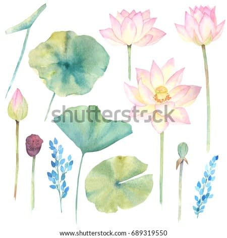 Set with lotus flower and leaf. Watercolor hand drawn illustration. Chinese style