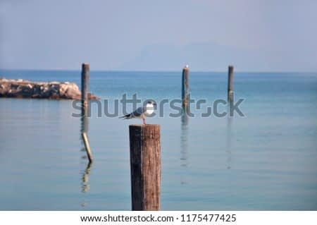 A seagull on a wooden pole placed in the waters of Lake Garda (IT). Landscape/Background/Panorama
