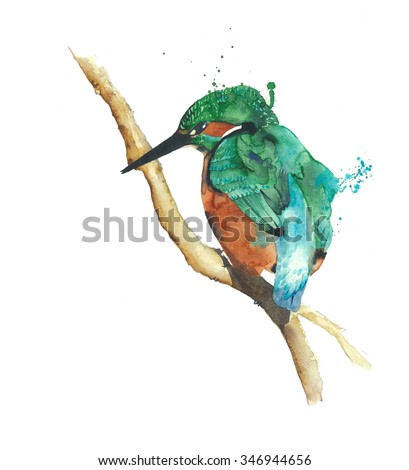 Kingfisher bird watercolor painting illustration isolated on white background