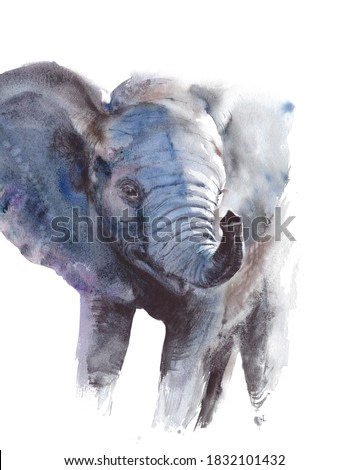 Baby elephant head portrait African endangered wildlife animal watercolor painting illustration isolated on white background