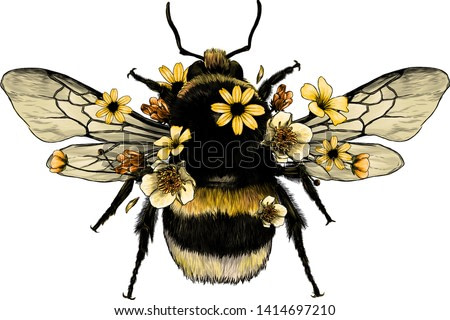 fluffy bumblebee in yellow top view with wings, sketch vector graphics color illustration on white background