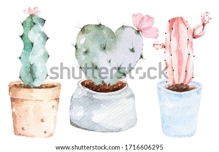 Illustration of heart shaped cactus painted with watercolors.Botanical painting.Plants that grow in the desert.Flowerpots painted with watercolors.Cactus plants in ceramic pots.