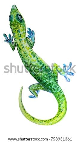 watercolor illustration of a green lizard