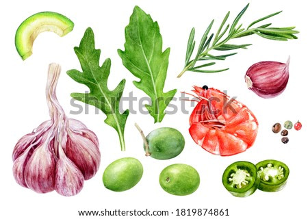 Garlic shrimp olives rosemary arugula avocado jalapeno peppercorns set watercolor painting isolated on white background