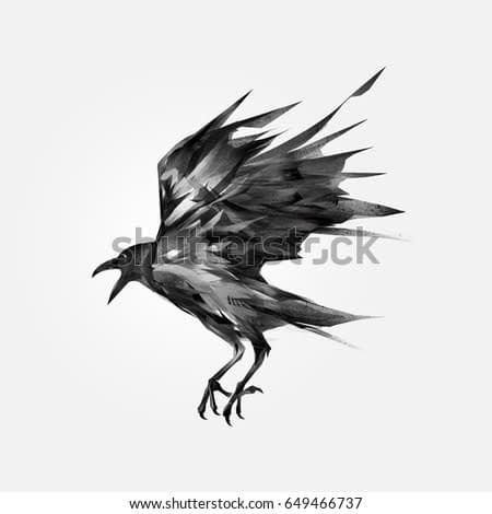 drawn isolated flying black crow