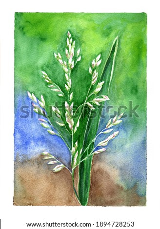 Watercolor Flower Grass Painting Illustration Nature