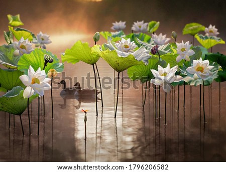 Fine art - Beautiful white lotus flower and two ducks in lake