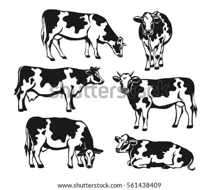Holstein cattle silhouette set. Cows front, side view, walking, lying, grazing, eating, standing