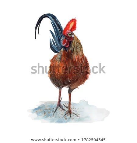 Chicken Watercolor painting isolated. Watercolor hand painted cute animal illustrations.