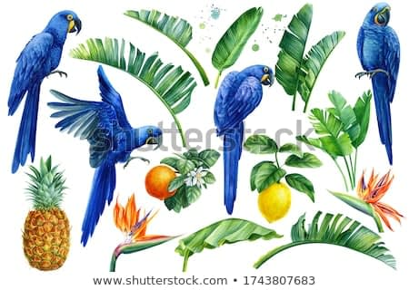 Set of watercolor hand drawn tropical birds, parrots, fruits lemons, oranges, pineapple, palm leaves, strelitzia flowers on an isolated transparent background, watercolor illustration