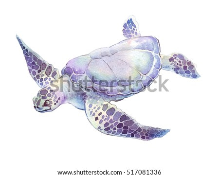 swimming turtle isolated hand painted watercolor illustration