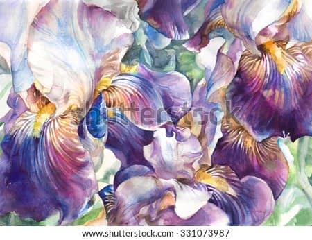 Flower garden. Beautiful watercolor flowers , background of flower petals in rich purple and violet tones. Hand illustration - watercolor on textured paper.