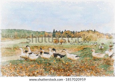 Watercolor painting of ducks with autumn nature background.