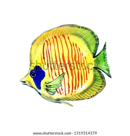 Aquatic underwater colorful tropical fish set. Red sea and exotic fishes inside: Goldfish. Watercolor background set. Watercolor drawing fashion aquarelle. Isolated goldfish illustration element.