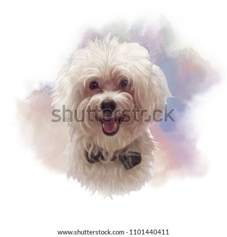 Maltese Poodle Dog. The Bolognese. Toy or Miniature Poodle on watercolor background. Cute puppy with the bow tie. Watercolor hand drawn pet illustration. Animal art collection: Dogs. Good for print