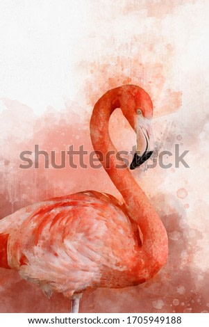 Portrait of a Flamingo, watercolor painting. Red flamingo (Phoenicopterus ruber), zoological illustration, hand drawing.