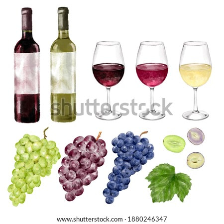 3 types of grapes, bottles of red wine and white wine, watercolor style illustration set of grape cross section