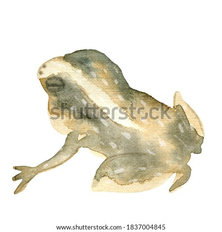 Watercolor oriental vintage frog elements. Japanese frog. For design of cards, logo, packaging, fabrics, prints, posters.