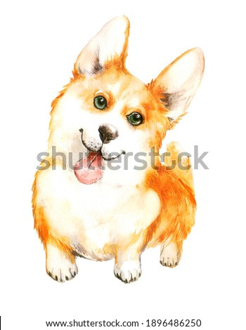 cute corgi with protruding tongue on a neutral background. watercolor illustration or print of a pet dog