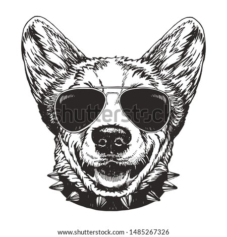 Portrait of Pembroke Welsh Corgi with sunglasses and collar, hand-drawn illustration, vector