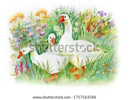 Goose farm animal pet geese house birds watercolor painting illustration