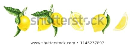 Lemons on a branch with leaves, half of lemon and slice of lemon, watercolor painting. For design prints, cards and patterns.