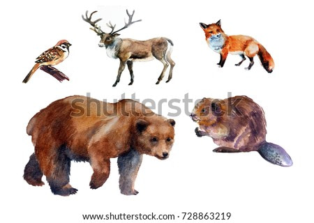 animals in the central part of Russia. watercolor illustration. forest animals