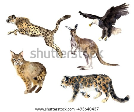 Watercolor wild cats set. Animal silhouette sketch. Wildlife art illustration. Vintage graphic for fabric, postcard, greeting card, book
