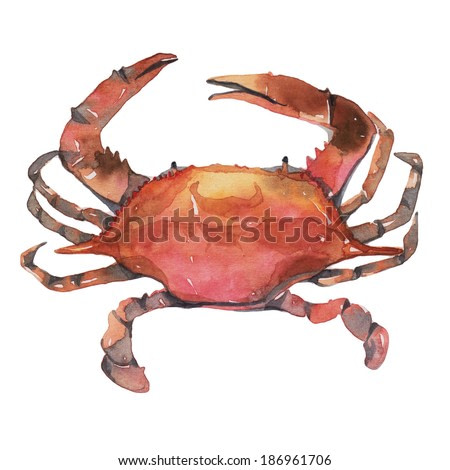 Crab,  watercolor painting on white background