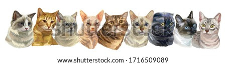 Vector horizontal illustration with isolated different cats breeds portraits standing in a row. Cats vector vintage illustration in realistic style.Image for design, cards, tattoo.Stock illustration