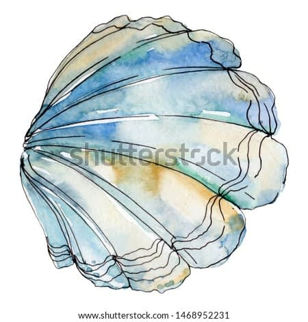 Watercolor summer beach seashell tropical elements isolated. Underwater creatures: mollusk, cockleshell, scallop and others. Aquarelle elements for background, texture, wrapper pattern.