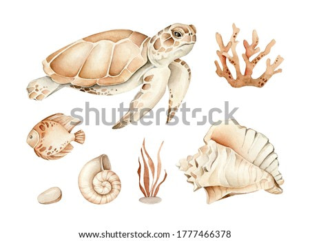 Hand drawn watercolor sea life collection: turtle, seaweed, coral, fish, shells.Objects isolated on white background