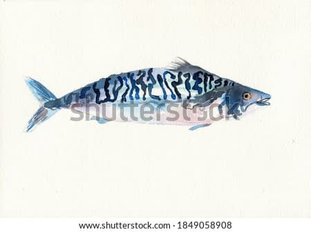 Mackerel watercolor painting seafood illustration