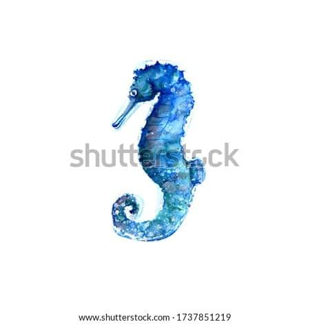 Aquarelle painting of seahorse sketch art pattern illustration
