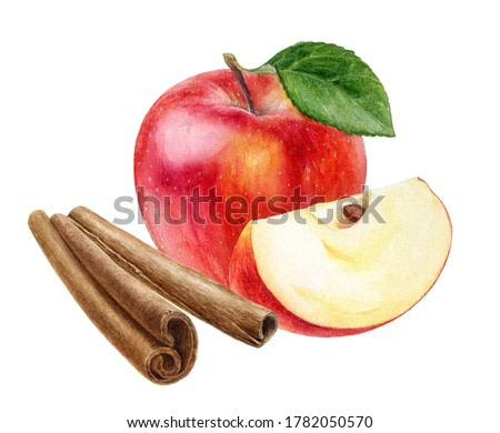 Cinnamon sticks and red apple composition watercolor illustration isolated on white background