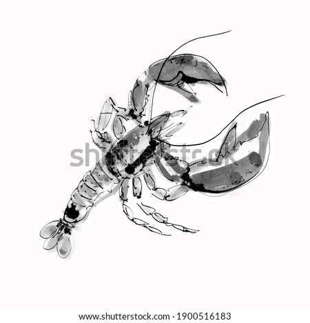 Watercolor lobster on a white background. Graphic art. Ink drawing. Hand drawing. Postcard, design, wallpaper, poster, graphic resource.