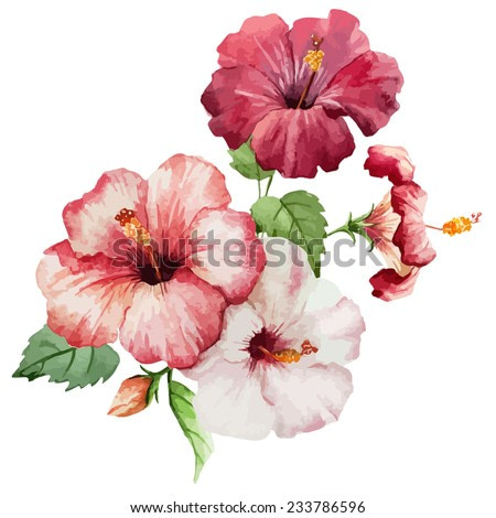 hibiscus, object, painting