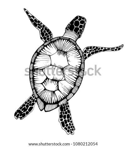 sea turtle outline isolated on white background, vector illustration , ink, hand drawing