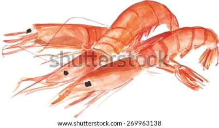 Three watercolour shrimps, vector drawing