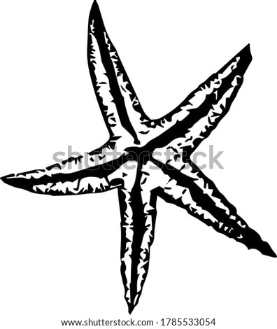 Sea star vector sketch in hand drawn style on white background. Line art collection. Outline symbol collection. Vector icon. Doodle element. Grunge background.