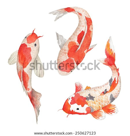 Watercolor oriental rainbow carp set. Isolated hand drawn fishes. Underwater wildlife illustration in vector