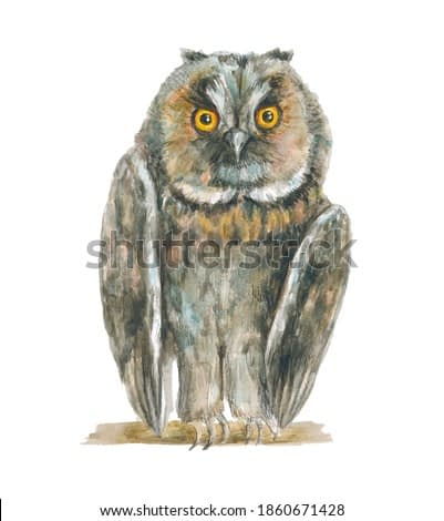 Watercolor illustration; realistic drawn owl sits on a tree branch. A bird with amber eyes looks ahead. A beautiful, feathered, looking animal.