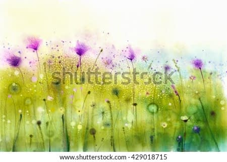 Abstract watercolor painting purple cosmos flowers and white wildflower. Wild flowers meadow, green field paintings. Hand painted floral, flower in meadows. Spring flower seasonal nature background