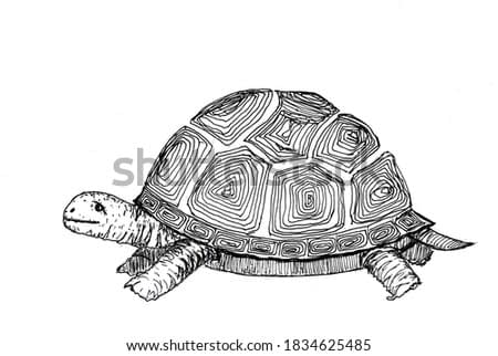 Turtle sketch for coloring book drawn with black pen. Freehand drawing illustration. Land animal. Hand drawn isolated on white background. Copy space.